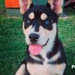 ¡Increíble! Los cruces de razas de perro más extraños que nos regala la naturaleza