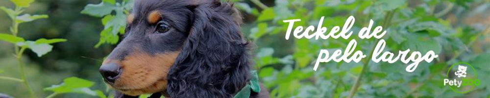 teckel-pelo-raza-perro
