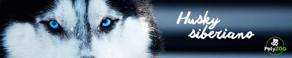husky-siberiano-perro-razas-cuidados-consejos