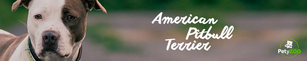 american-terrier-cuidados-higiene-alimentacion