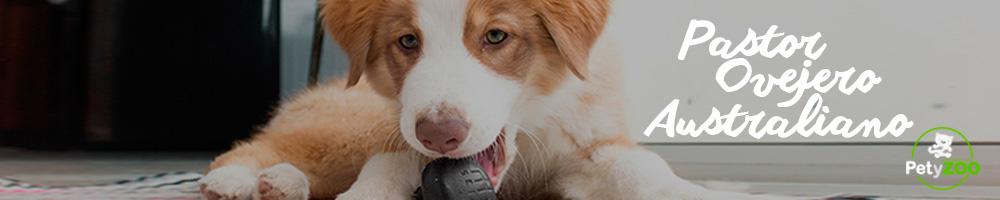 pastor-ovejero-australiano-perro-razas