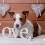 San Valentín es también para tu perro