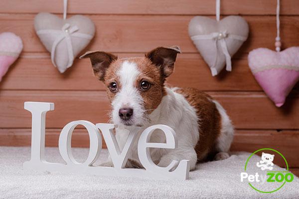 petyzoo-san-valentin-perros-regalos