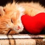 El San Valentín perfecto para tu gato (Se lo merece) ❤