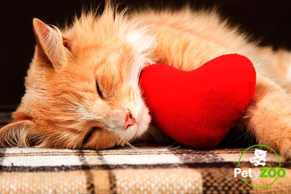 san-valentin-gato