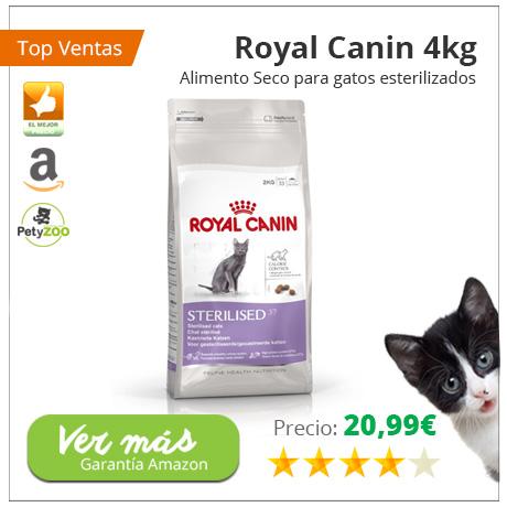 san-valentin-royal-canin-gatos-petyzoo