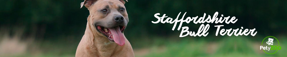 staffordshire-bull-terrier-caracteristicas