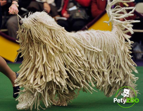 komondor-adiestramiento-perro