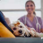 Las 10 razones más frecuentes por las que vomitan los perros
