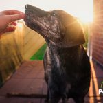 Conoce las golosinas que sí puedes darle a tu perro y las que no deberías darle nunca