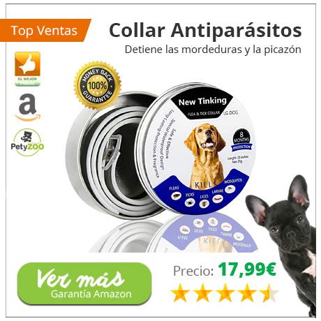 ¿Por qué mi perro necesita un collar antiparasitario? 1
