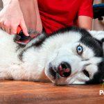 Estabas peinando mal a tu perro (hasta ahora)