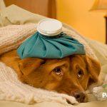 Por qué el xilitol es un veneno peligroso para tu perro…