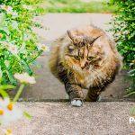 El sobrepeso de tu gato puede ser un problema grave