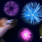 ¿A tu perro le asusta la pirotecnia? Aprende cómo actuar ante esta fobia