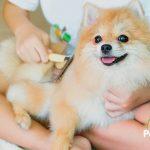 Cuidado con los parásitos que puede contagiarte tu mascota