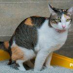 ¿Tu gato no usa el arenero? Descubre cómo conseguirlo