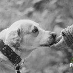 ¿Por qué duele tanto la pérdida de una mascota?