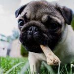 ¿Necesitas controlar la ansiedad de tu perro por la comida? ¡Su salud dependerá de ello!