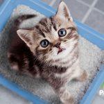 ¡Solución encontrada al mal olor del arenero de gatos!