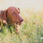 Por qué tu perro disfrutará tomando el sol