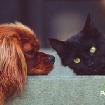 ¿Primeros síntomas de sarna en tu mascota? ¡Actúa!