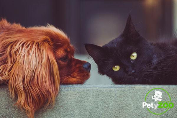 sarna en perros y gatos