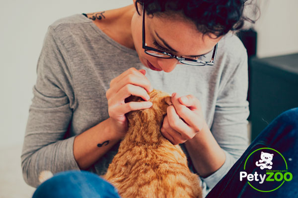 ¿Cómo elimino las pulgas en mi mascota? (Soluciones - Prevención - Causas) 1