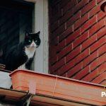 12 cosas que tienes en casa y pueden matar a tu gato 🐈 ¡Cuidado!