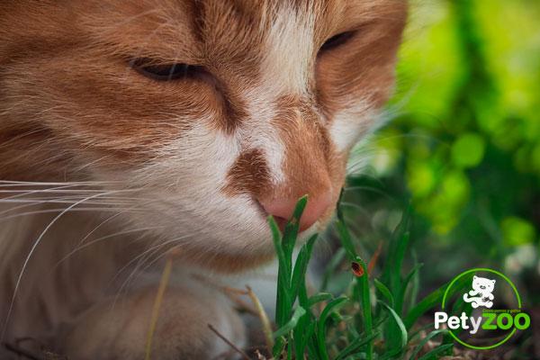 12 cosas que tienes en casa y pueden matar a tu gato 🐈 ¡Cuidado! 2