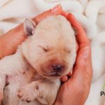 ¿Cuánto dura el embarazo de una perra? 🐶🍼💕