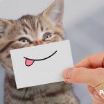 El pienso que más le gusta a tu gato 🐱