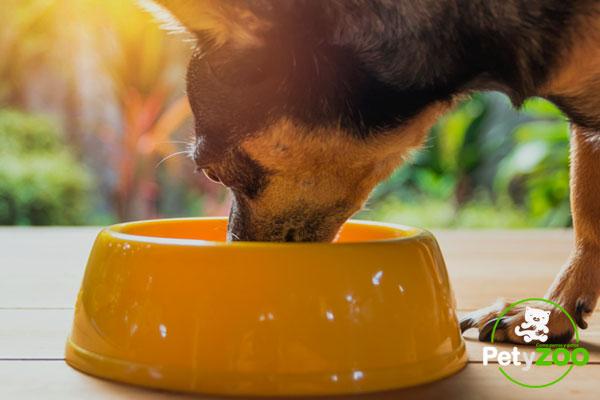 ¿Por qué no le estás dando alimentos naturales a tu perro? 🐶 1
