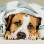 Cómo tratar a un perro con diarrea 🐶❗⚠