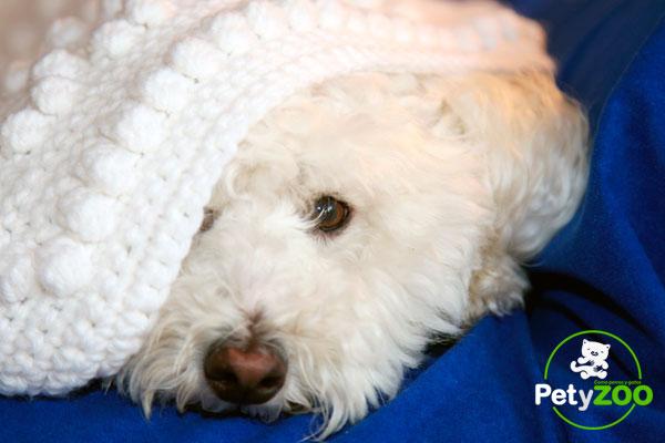 ¿Sabes cuáles son los síntomas del moquillo en perros? 🐕 1