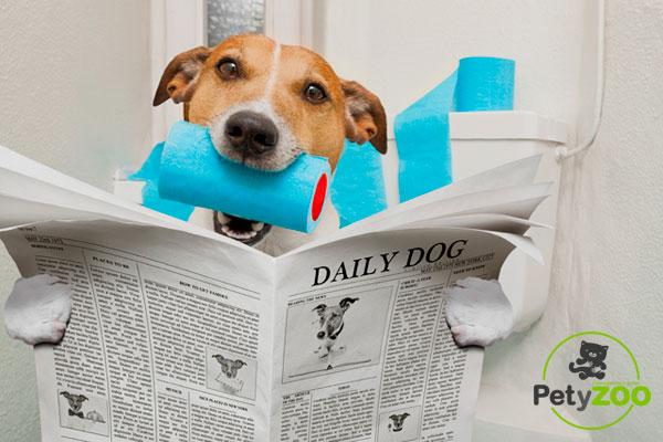 Cómo tratar a un perro con diarrea 🐶❗⚠ 4