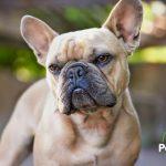 ¿Es peligroso castrar a mi perro? ⚠🐶