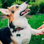 10 trucos y consejos infalibles para educar a tu perro 🐕