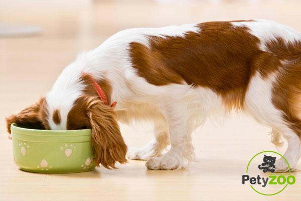 Apuesta por el sabor, la calidad y más nutrientes en la comida de tu mascota 1