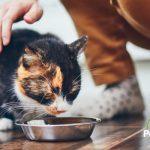 Apuesta por el sabor, la calidad y más nutrientes en la comida de tu mascota
