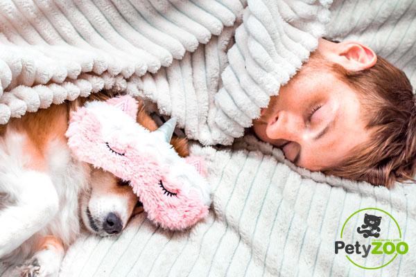 Descubre por qué tu perro duerme contigo 1