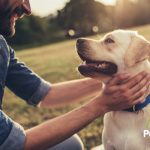 Los 4 beneficios de tener un perro labrador