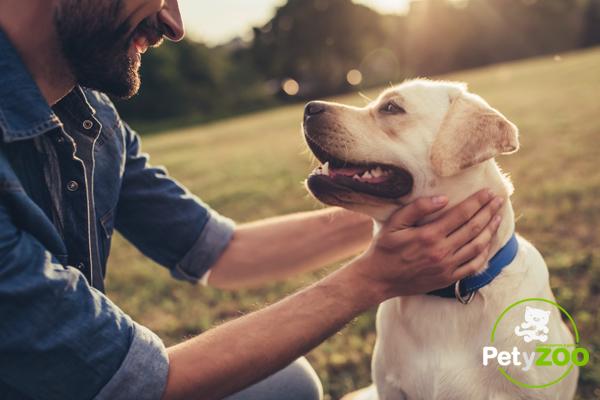 Conocer los beneficios de un perro labrador