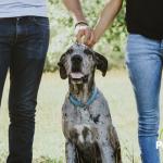 ¿Sabías que acariciar a tu perro o gato es beneficioso para tu salud?
