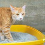 3 cosas de la arena sanitaria de tu gato que no sabías