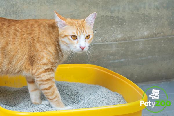 Tips sobre el arenero de los gatos