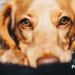 5 Consejos para lavar los ojos de los perros