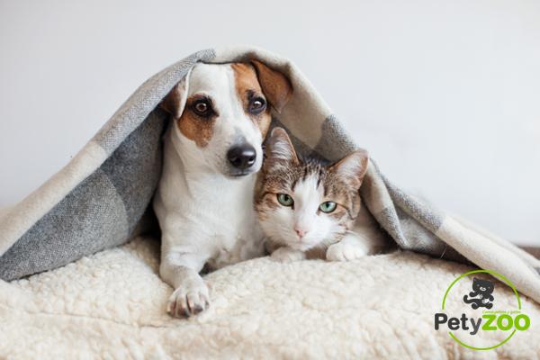 Consejos para la convivencia entre perros y gatos
