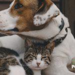 4 Consejos para la buena convivencia entre perros y gatos