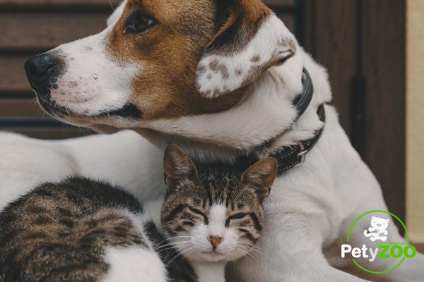 Consejos para una buena convivencia entre perros y gatos